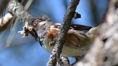 bird-brainy03.jpg