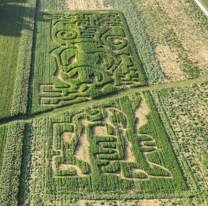 Hemp-maze-2.jpg