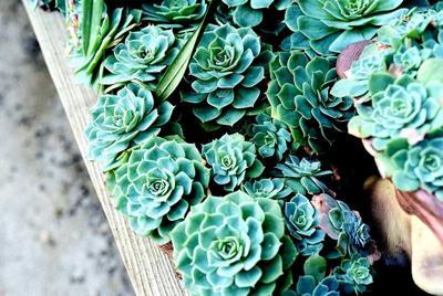 LF20210508-Succulents02.jpg