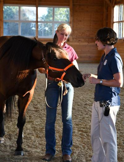 Simple steps to assess a horse's neurological problems | Mid