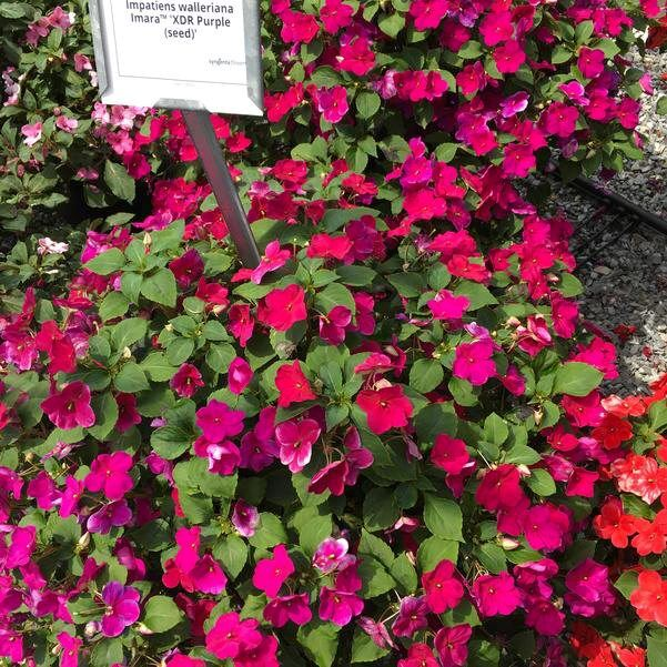 LF20200801-flower-02.jpg