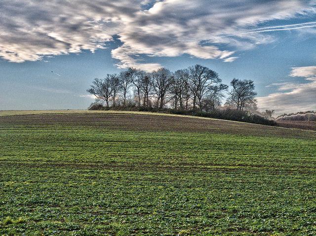 pasture grasses, creative commons