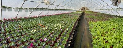 Delaware-greenhouse.jpg