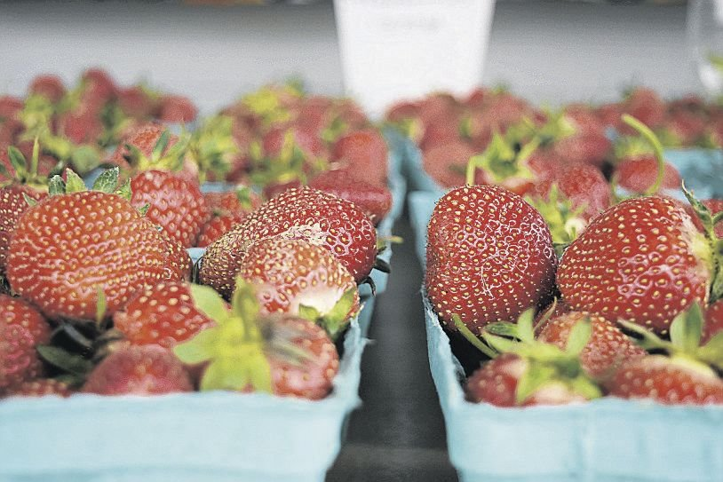 Lancaster Growers Want Sun to Go With Strawberries