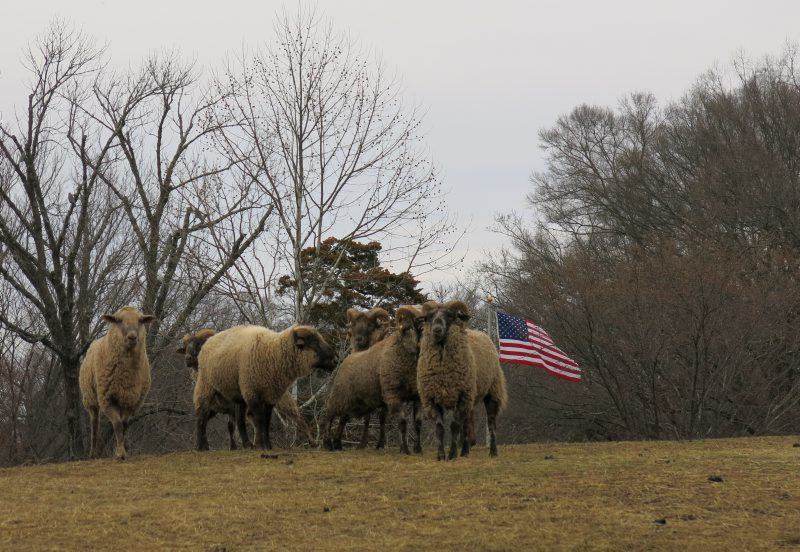 One Woman's Quest to Document America's Sheep | Latest News