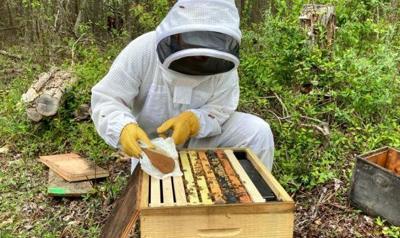 LF20210529N-Bees-1.jpg