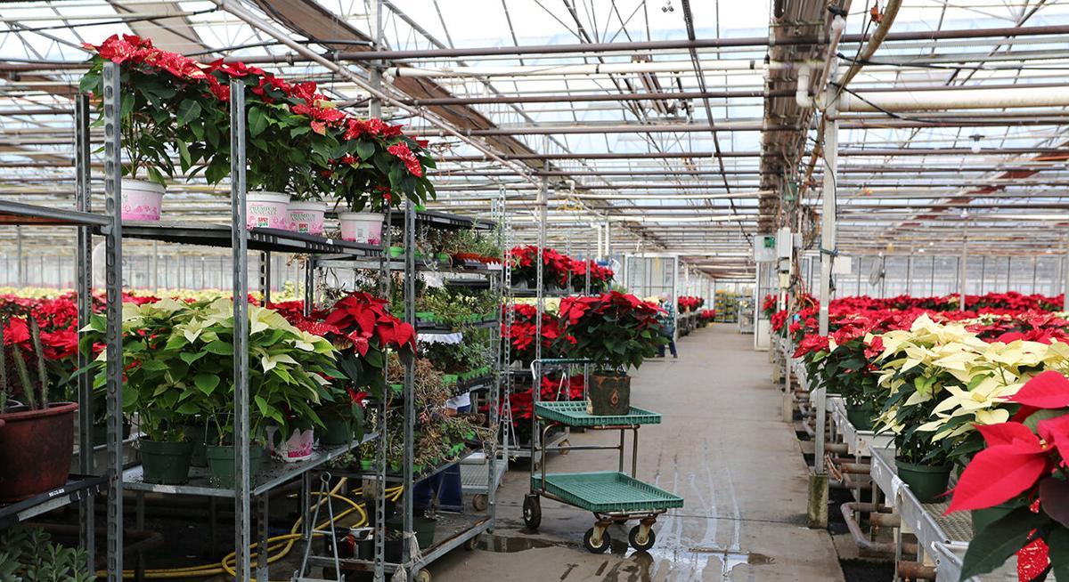 HIonis Greenhouse