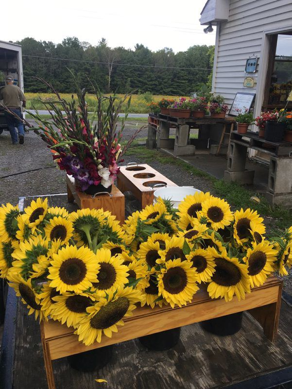 Cut Flowers Add Color To Ag Industry Northern Edition