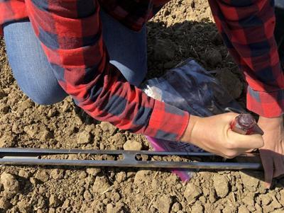 LF20190817-Sci-Compost-1.jpg