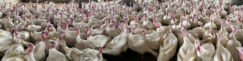 A-Turkey-5.jpg