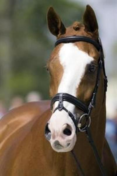 West Grove, Pa. barn fire survivor Neville Bardos a USEF Horse of the Year