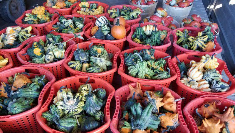 Post-Pumpkins-4.jpg