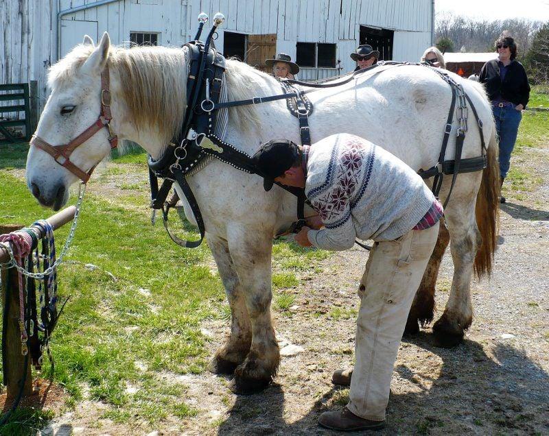 haislip-horse-draft-05.jpg
