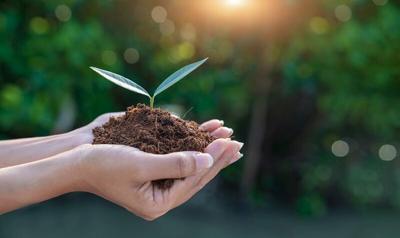 hand-holding-seedling.tif