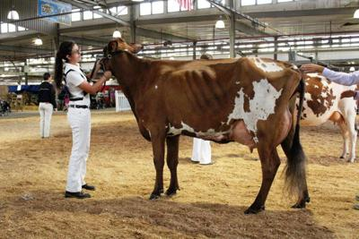 4-H & FFA Member Dedicated to Dairy | FFA, 4H and Youth Ag