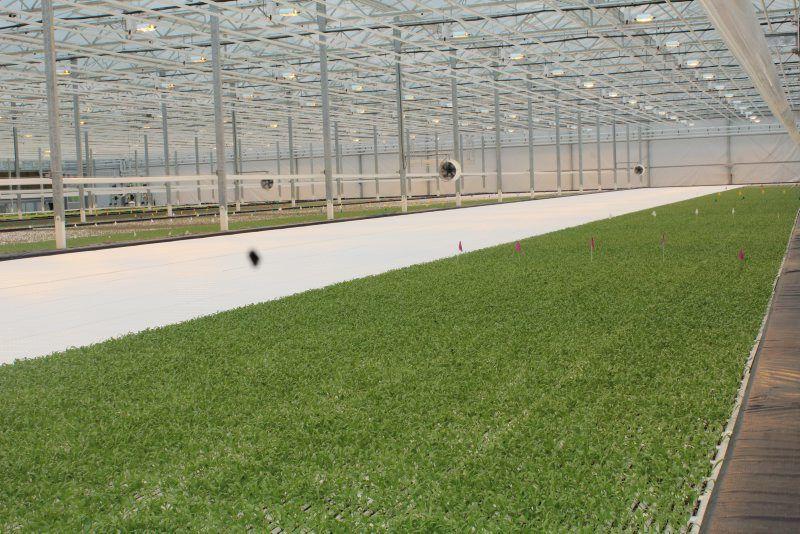 bright-farms-5.jpg