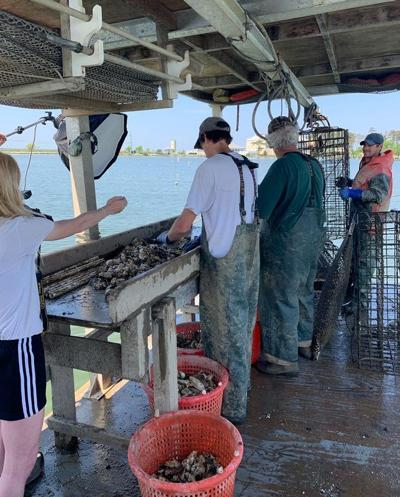 Oyster Farms Lead To Rise In Maryland Aquaculture Southern Region Lancasterfarming Com