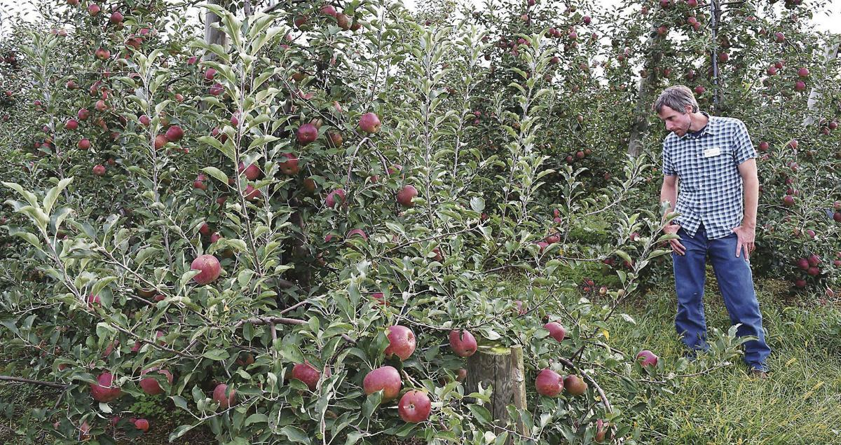 House Varieties Add Unique Taste to Chester County Orchard