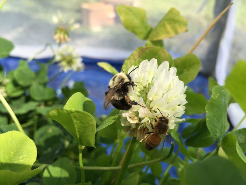 Post-Pollinators-3.jpg