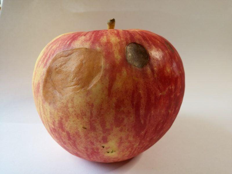 LF20210403N-Sergeant-Apples.jpg