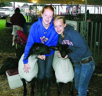 Sisters Hop Border for Sheep Show | Main Edition