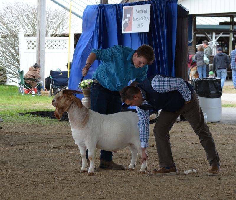 Roth-Livestock-Expo-3.jpg