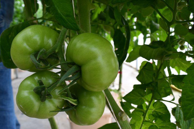 hydroponics-5.jpg
