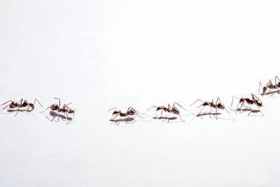 ants.tif