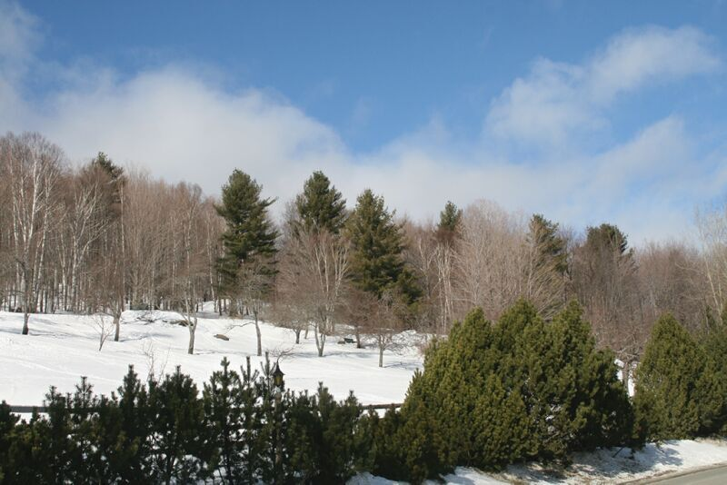 winter-forest.tif