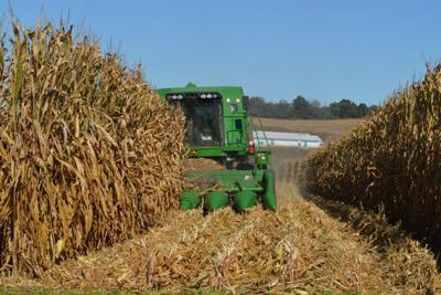 LF20191012-Harvest1.jpg