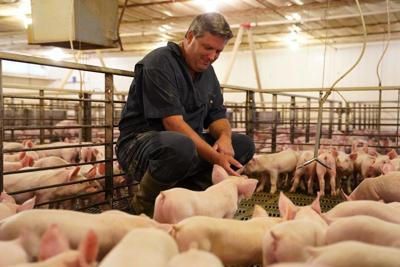 Hoffman with Piglets.jpg