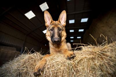 Portrait of a dog in a barn