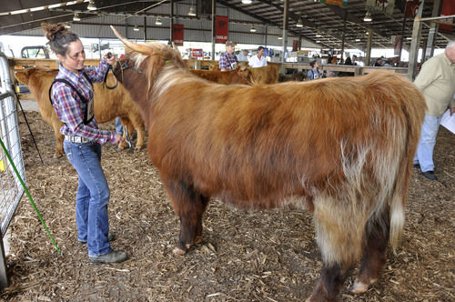 Highland Cattle Attract Fans in NY | Northern Edition