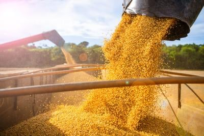 Harvesting and storing soybean