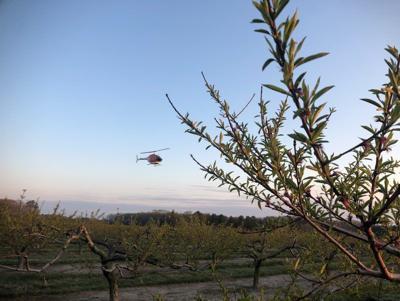 N-Short-Orchard-1.jpg