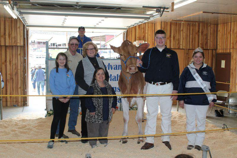 Golden Moments for Guernsey Breeders | Dairy Farming News