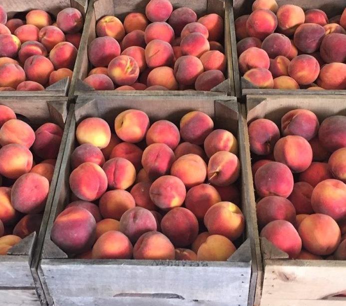 LF20210306-Peach-1.jpg