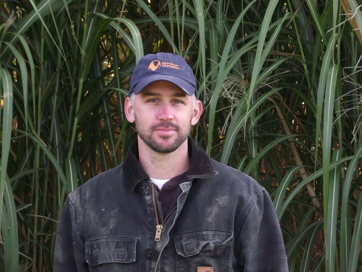 Dairy Tries Miscanthus as Bedding Supplement