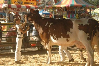 Showing animals at the Kimberton Fair