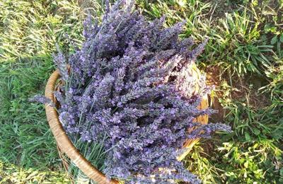 mountain-lavender-5.jpg