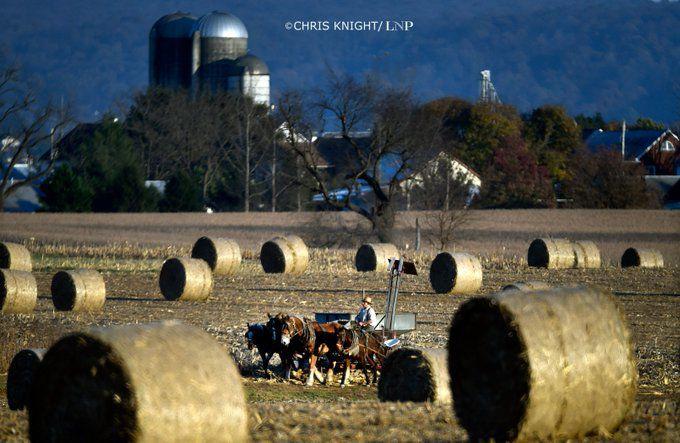 Amish farmer, November 2019