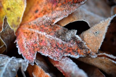 file photo of frost on leaves (copy)