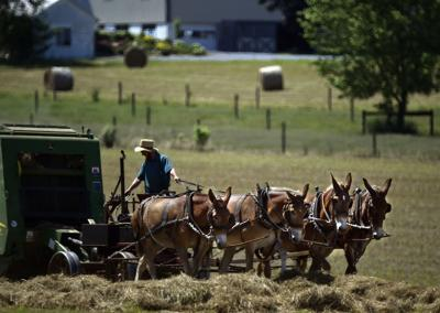 Amish Family Planting Seeds
