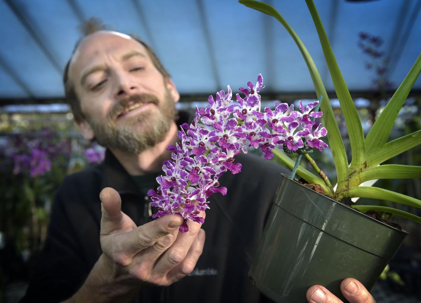 little brook orchids01.jpg