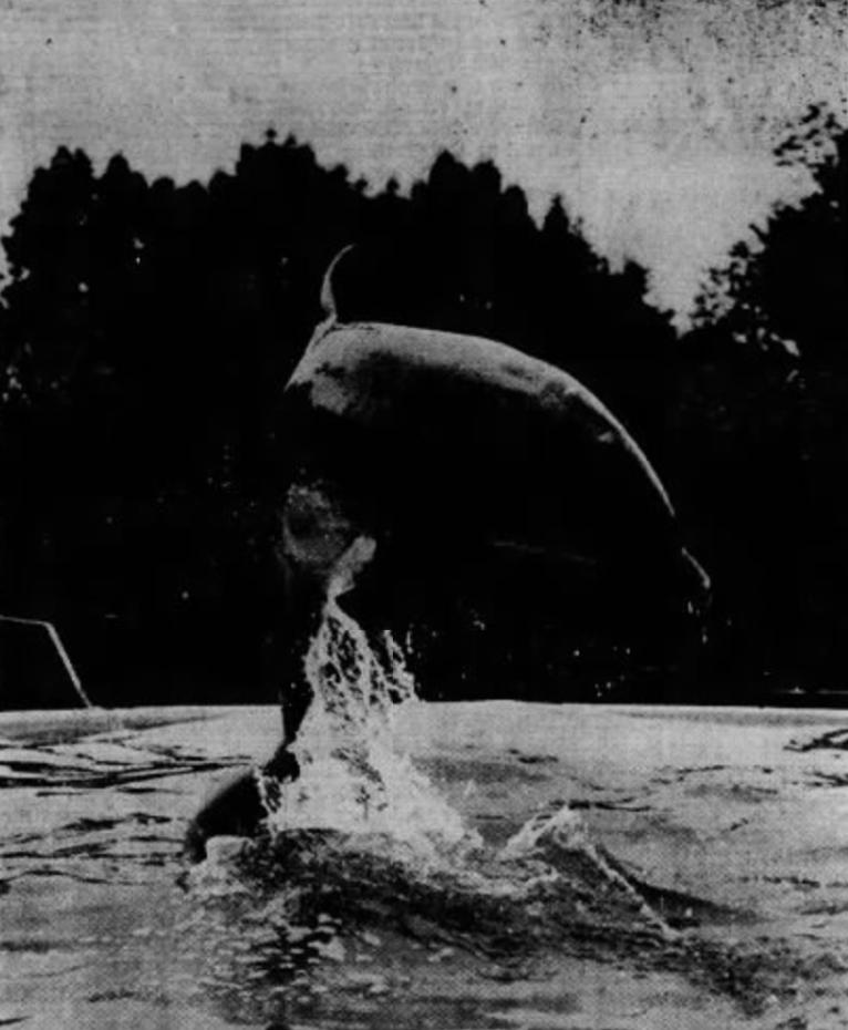 Dutchie the dolphin