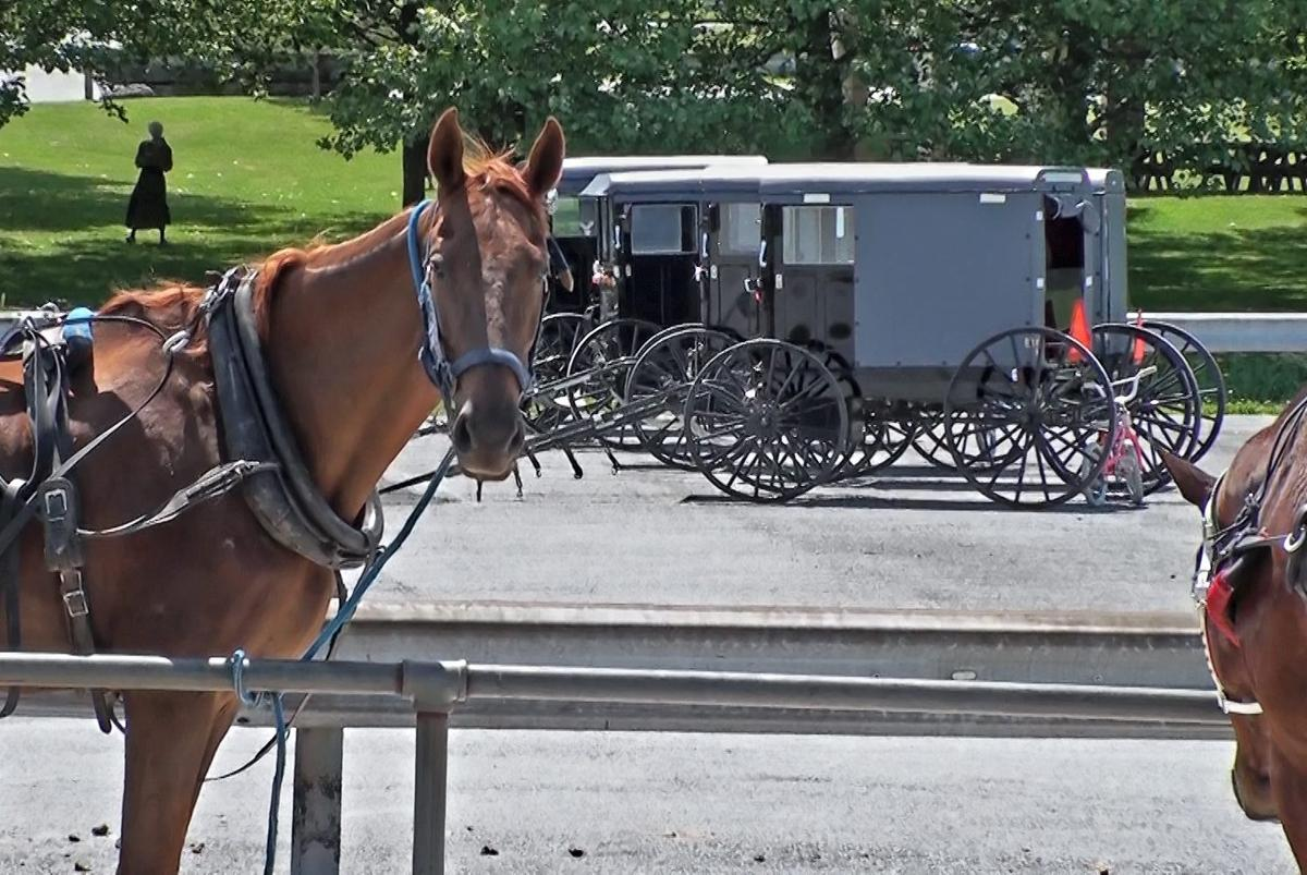 Horses and buggies