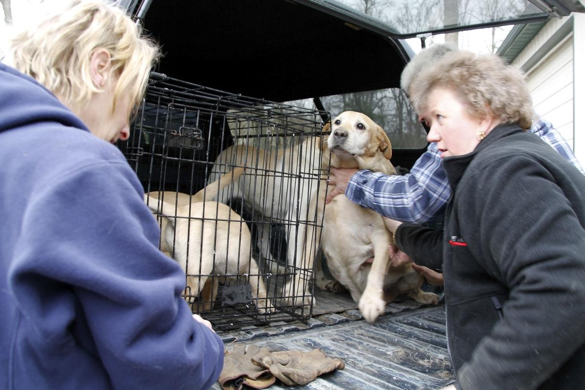 Dog Kennel Fire