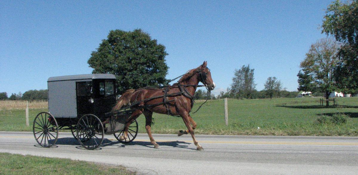 Image result for amish buggy and fields