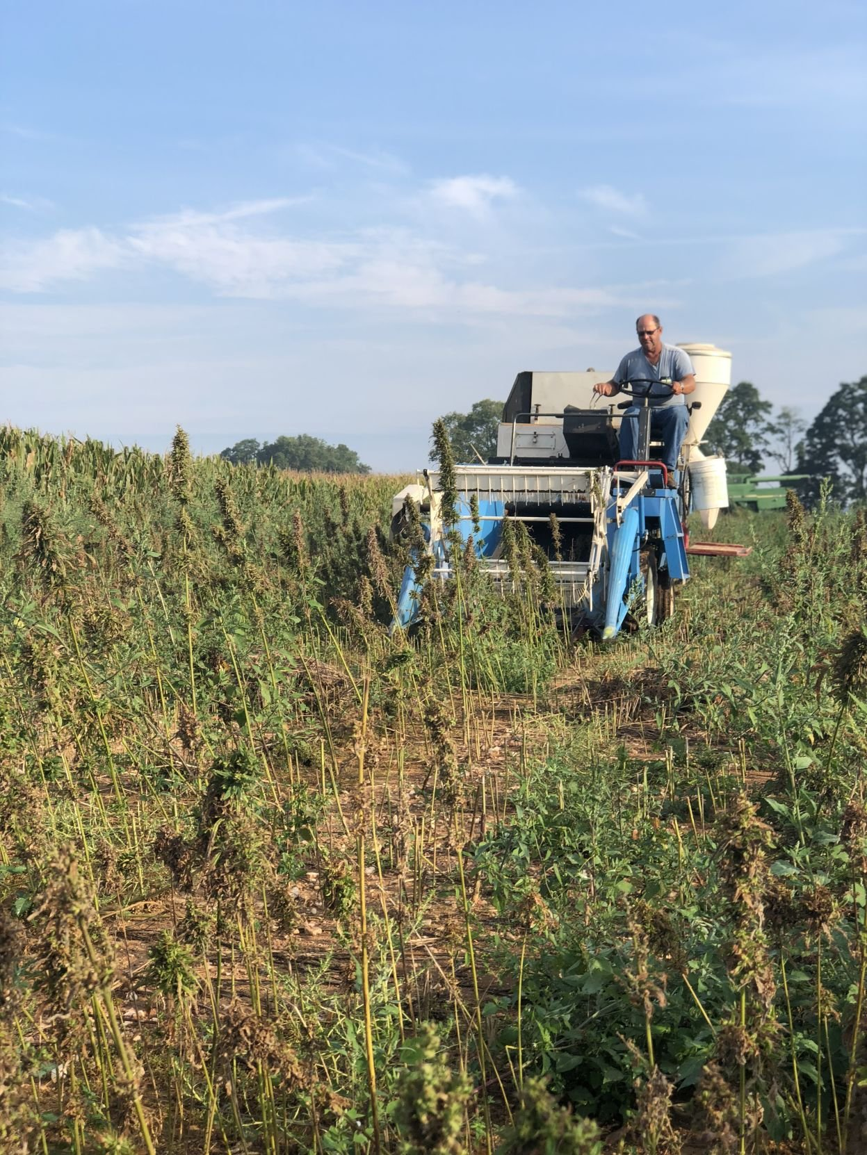 Online Hemp Farms