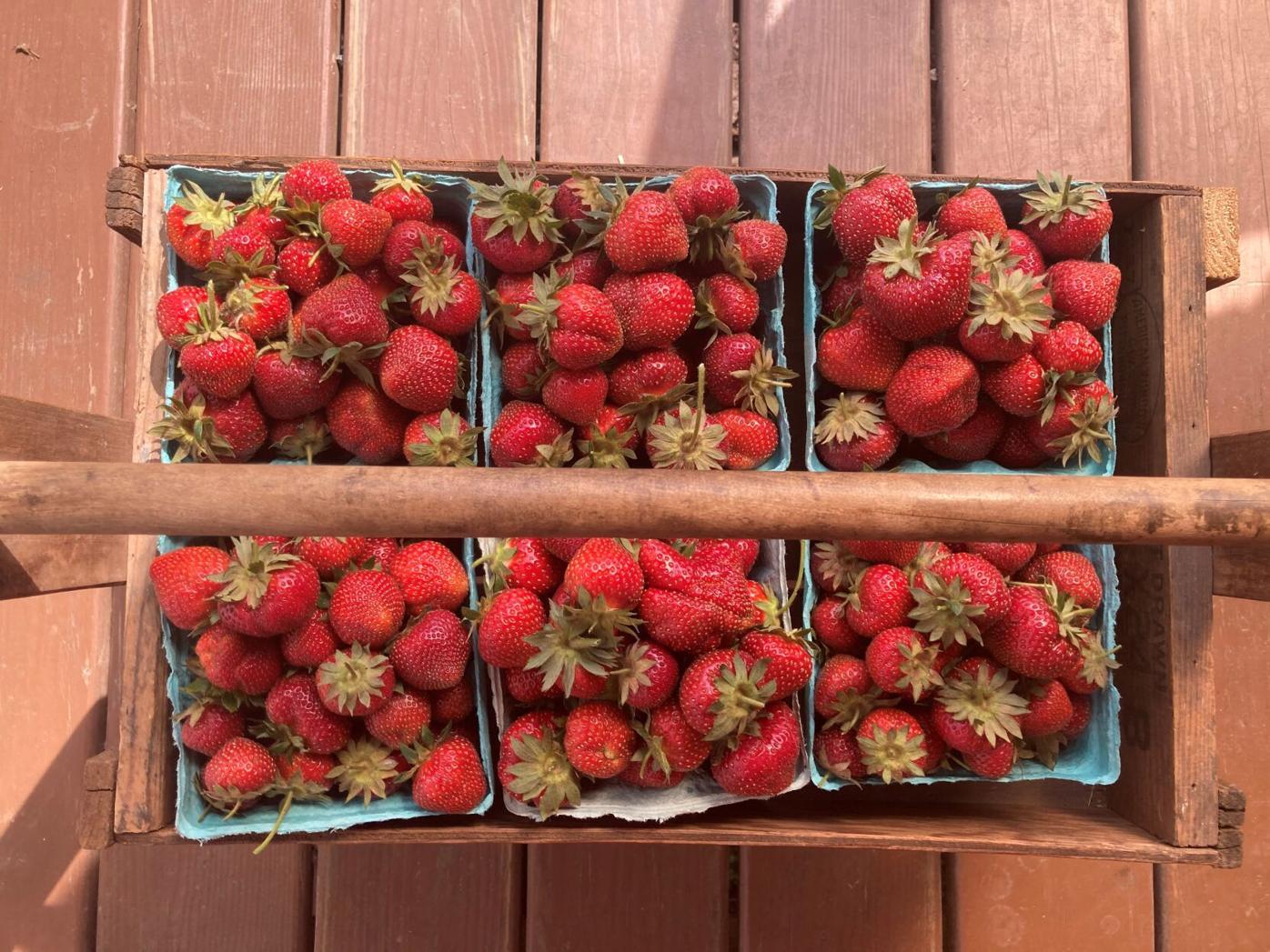 Strawberries from Gap View Farm Market